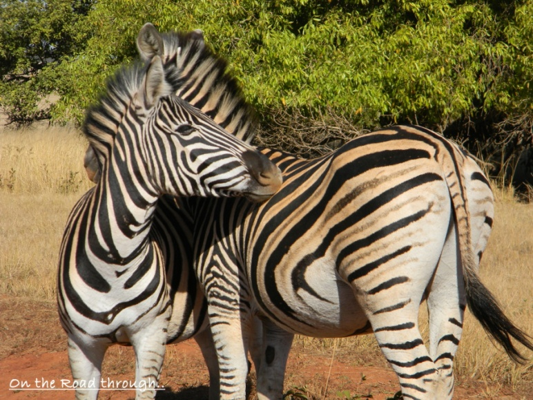 Kruger National Park. Image Courtery - Marica (On The Road)