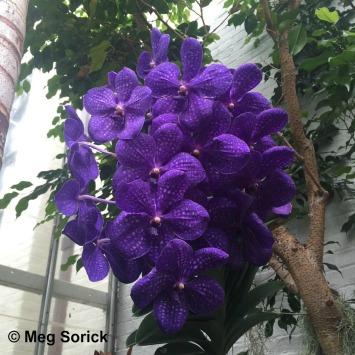 Orchid Palooza; Meg Sorick